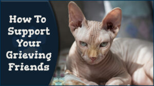 Support Your Grieving Friends