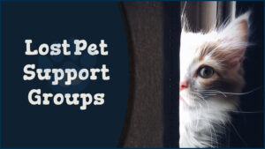 Lost Pet Support Groups