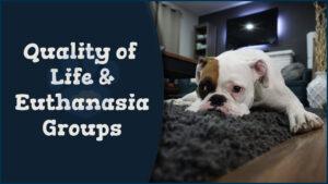 QOL and Euthanasia Groups