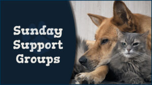 Sunday Support Groups