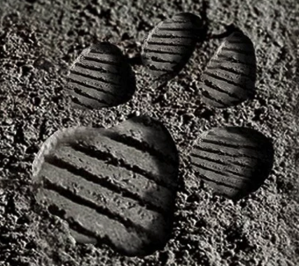 Moon Paws