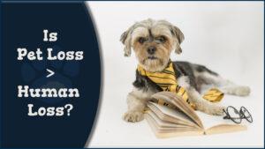 Is Pet Loss > Human Loss