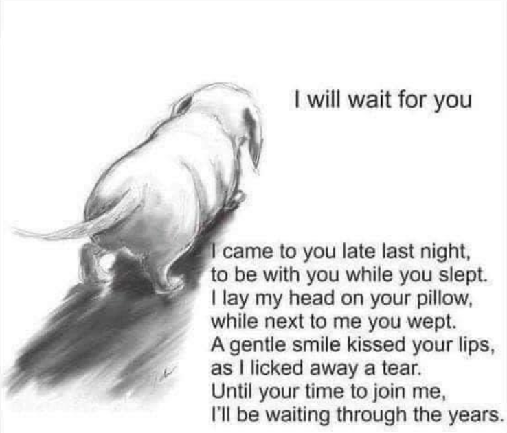 PetCloud - Sunday - 20210801 - I Will Wait For You